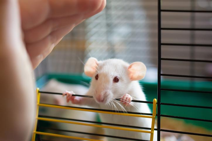人工子宮で育てられたマウス