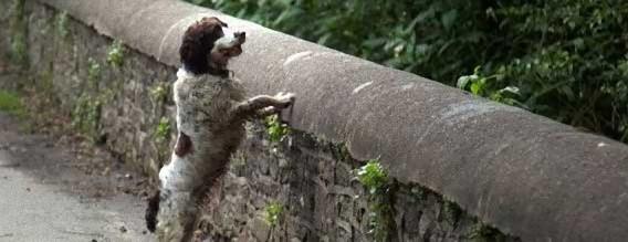 いったいなぜ?同じ場所で犬たちが謎の墜落死。犬の自殺スポット、スコットランド「オーヴァートン橋」