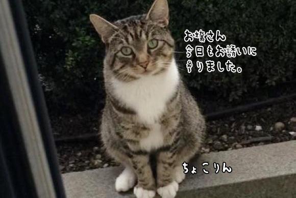 「じっと待ちます。親も大事にしますし。」ジェントルニャンな猫にぞっこんになったメス猫と飼い主(イギリス)