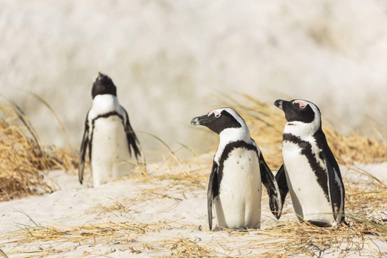 ゲイのペンギンカップルが、レズビアンカップルから卵を盗むという事案