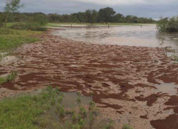 驚くべきハリケーン対策。巨大イカダを作り上げ戦略的移動を始めるヒアリたち