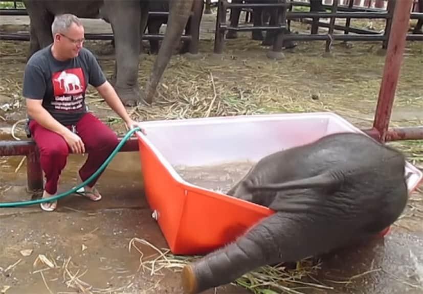 象の赤ちゃんの水遊び