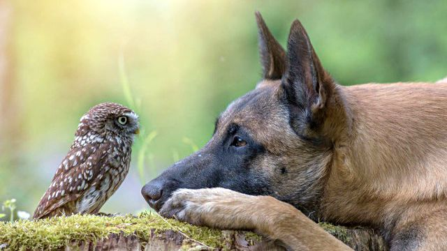 天翔ける翼と地を駆ける足。犬とフクロウの間に流れるやさしい時間をご覧ください