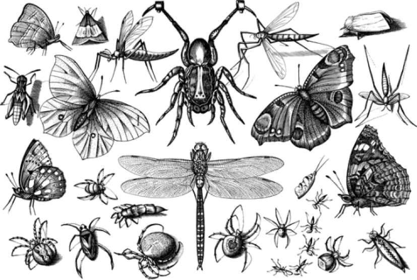 insects-4798274_640_e