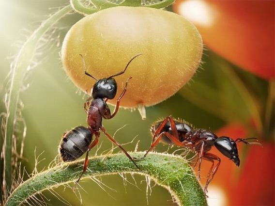 ants_16