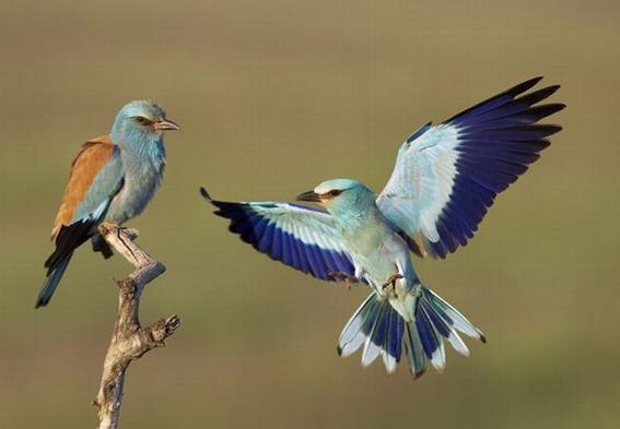 beautiful_photographs_of_birds_07