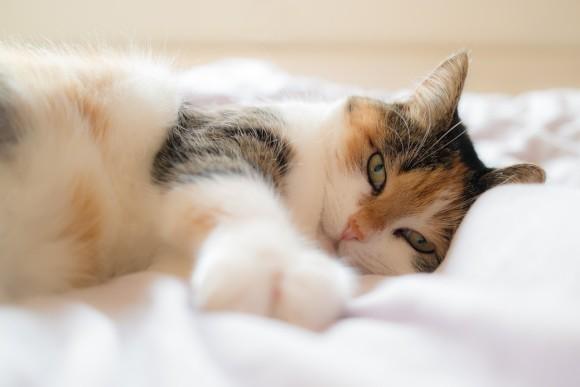 2018年、海外で人気の猫の名前トップ10が発表される
