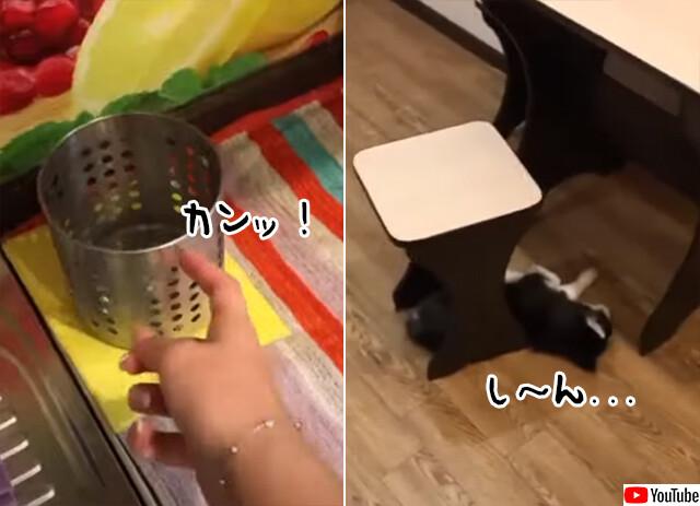 その音やない。微妙な音の違いを聞き分けられるハスキーの子犬