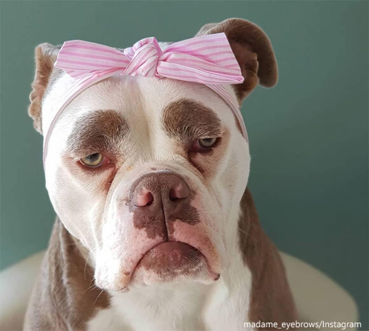 困り眉の犬