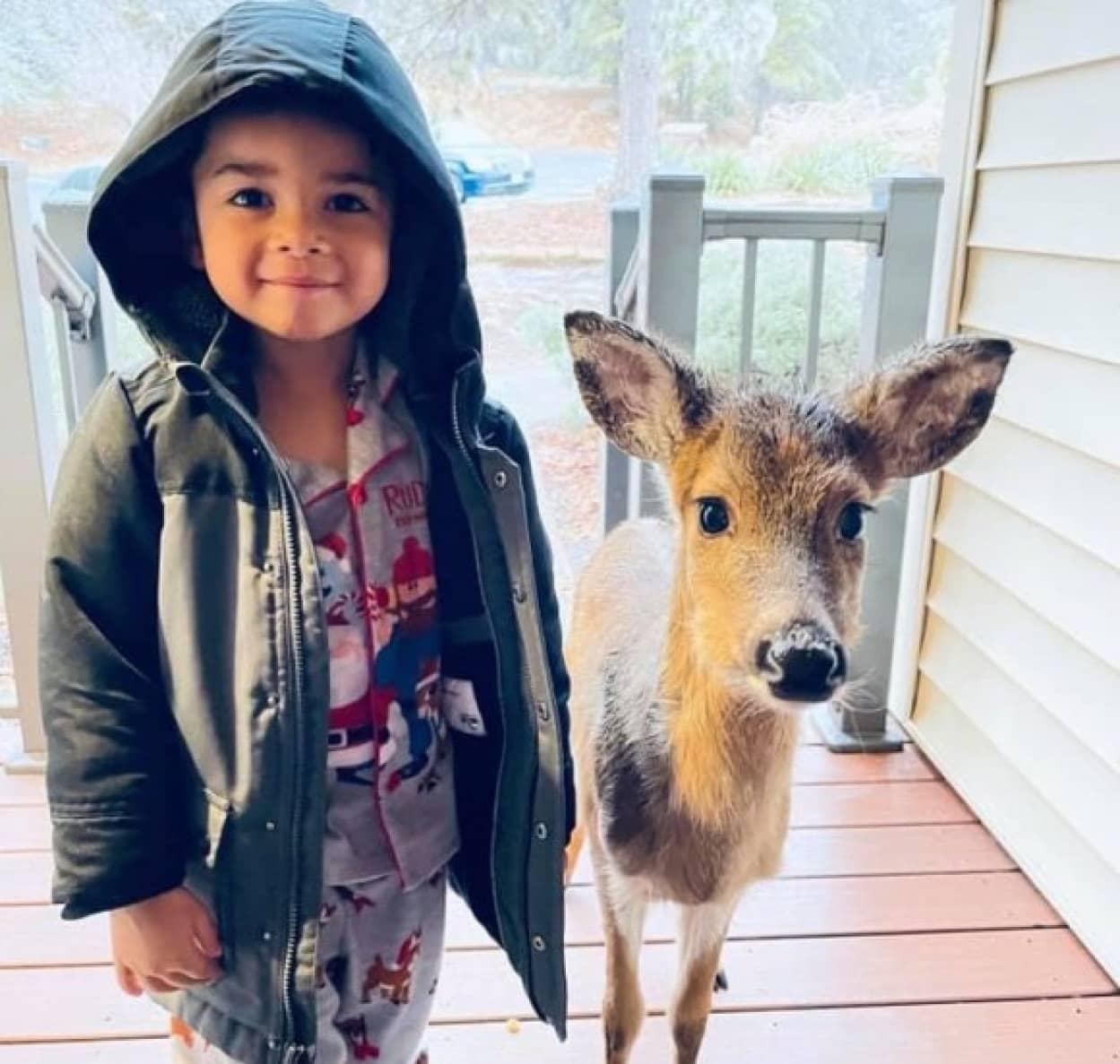 子供が小鹿の友達を連れて帰ってきた!