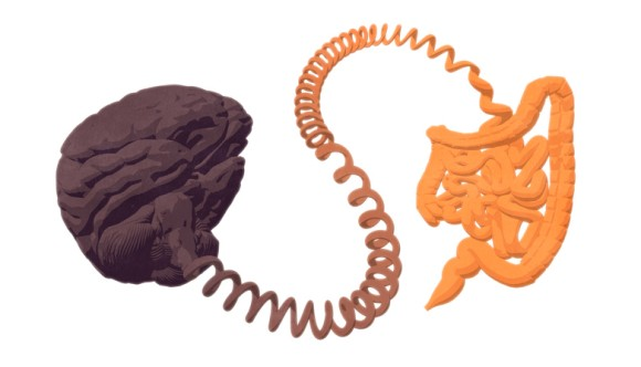 腸は「第二の脳」は本当だった。腸内のニューロンが結腸を動かし排便活動につながることが判明(オーストラリア研究)