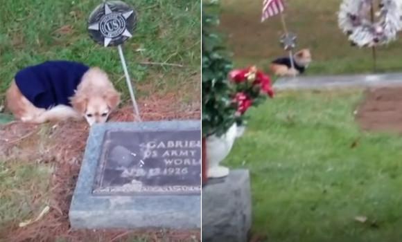 最愛の人がここにいるの。飼い主の墓から離れようとしない犬がまたここにも(アメリカ)