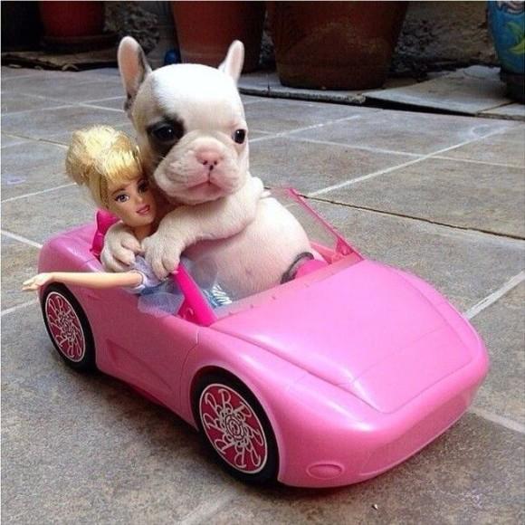 スポーツカーに乗るかわいい子犬