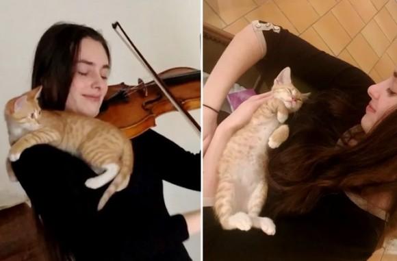捨て猫とバイオリン