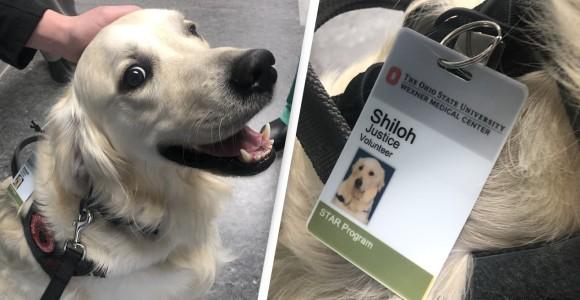 病院スタッフを癒すために雇われたセラピー犬