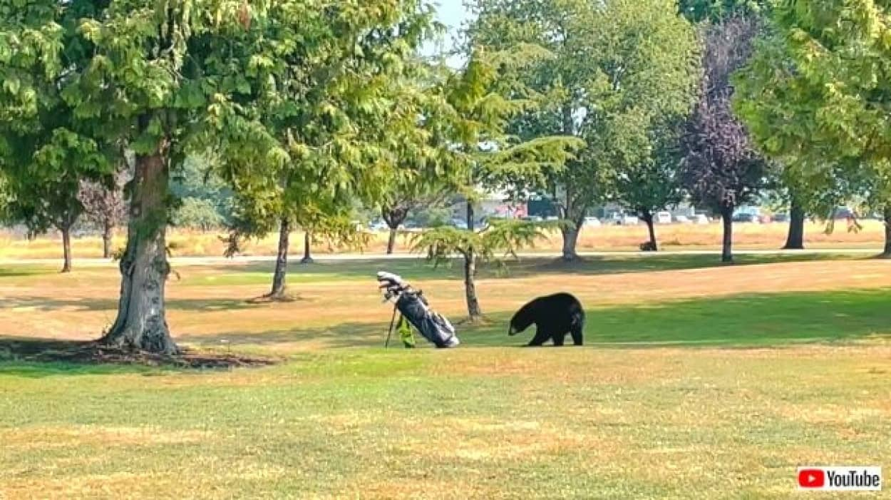 golfclubs2_640