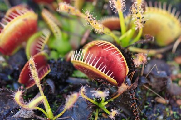 植物も動物同様、麻酔にかかることが判明(国際研究)