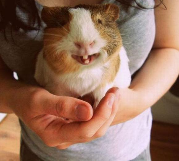 cute-smiling-animals-12_e