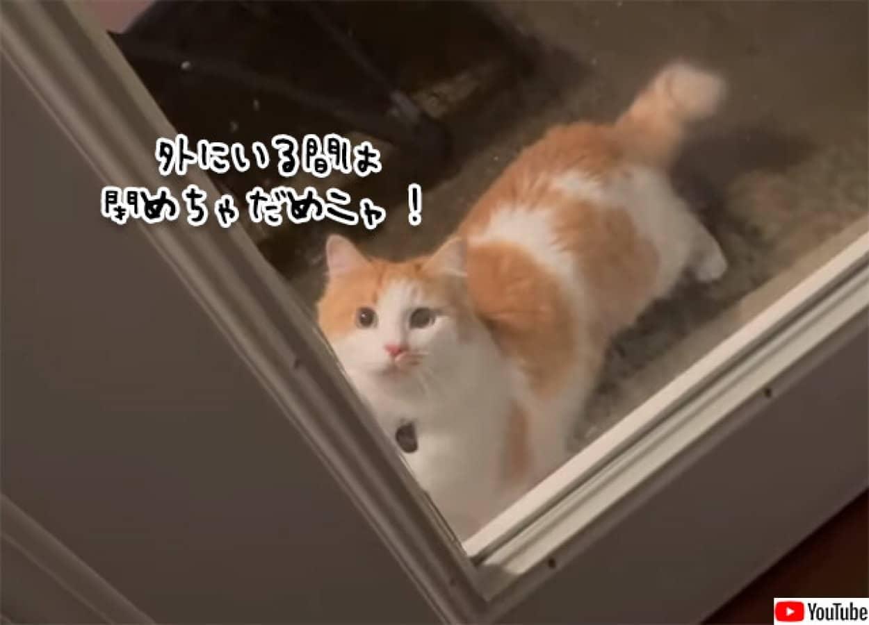 外に出ている間はドアを閉めることを許さない猫