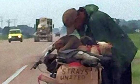 11匹の野良犬を救うため、自転車にカートを取りつけ3200キロの旅に出た初老のホームレス男性(アメリカ)