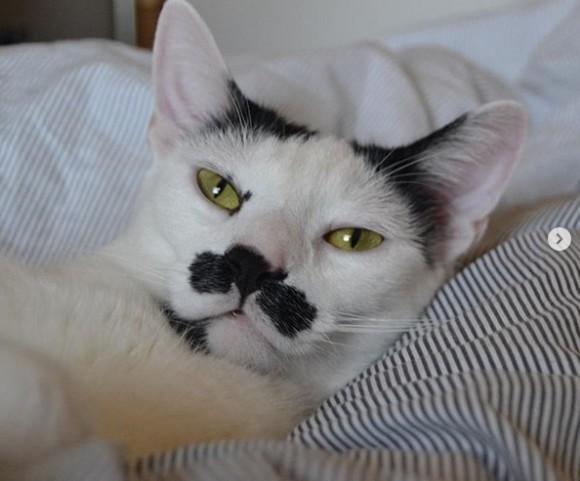 邪魔をするのが猫の仕事?