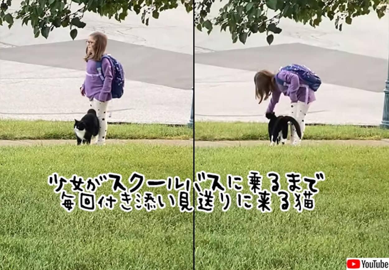 少女と一緒にバス停までついてきて、バスに乗るのを見届けると帰ってくる猫
