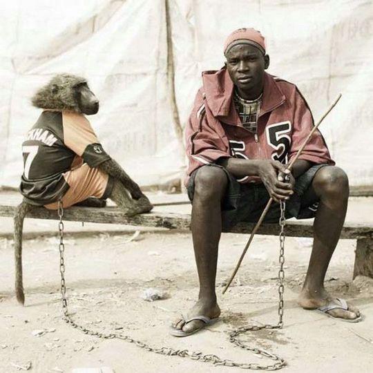 african_wild_pets_12