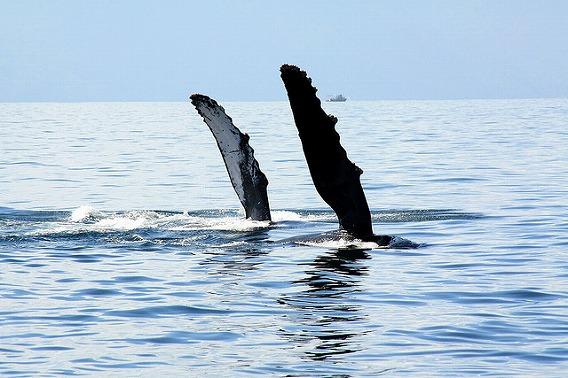 synchronized swimming animals 10