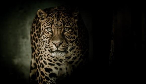 leopard-2896635_640_e