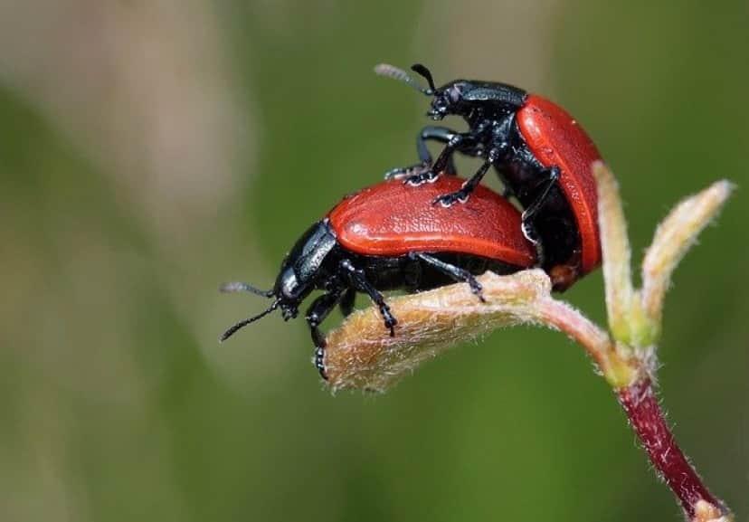 ladybugs-248481_640