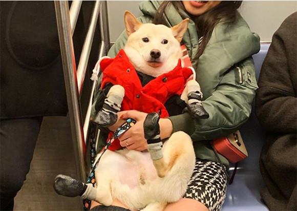 今日はいいことあるかも!公共交通機関で犬に出会った瞬間のほっこり感ったら!