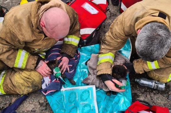 小さな尊い命が救われる瞬間。火事で心肺停止に陥った2匹の猫に小さな酸素マスクで救命措置(イギリス)