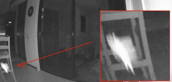 妖精さん?窓ガラスを突き抜けて家に侵入してきた翼をもつ白い発光物体(アメリカ)