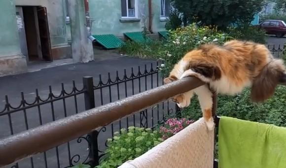 ギリッギリやないけ!バルコニーの手すりの上で寝る猫の身体能力