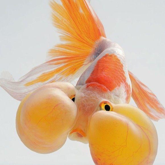 fish-5_e