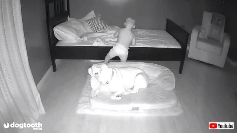 toddlerndog2_640