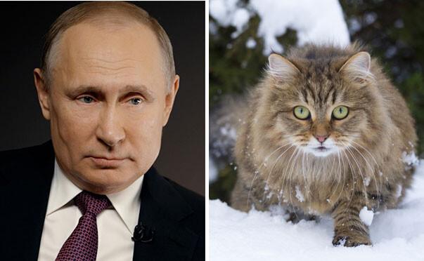 プーチン大統領、動物用コロナウイルスワクチンの開発に着手