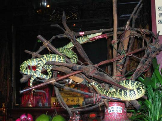 Snake-Temple-Penang5