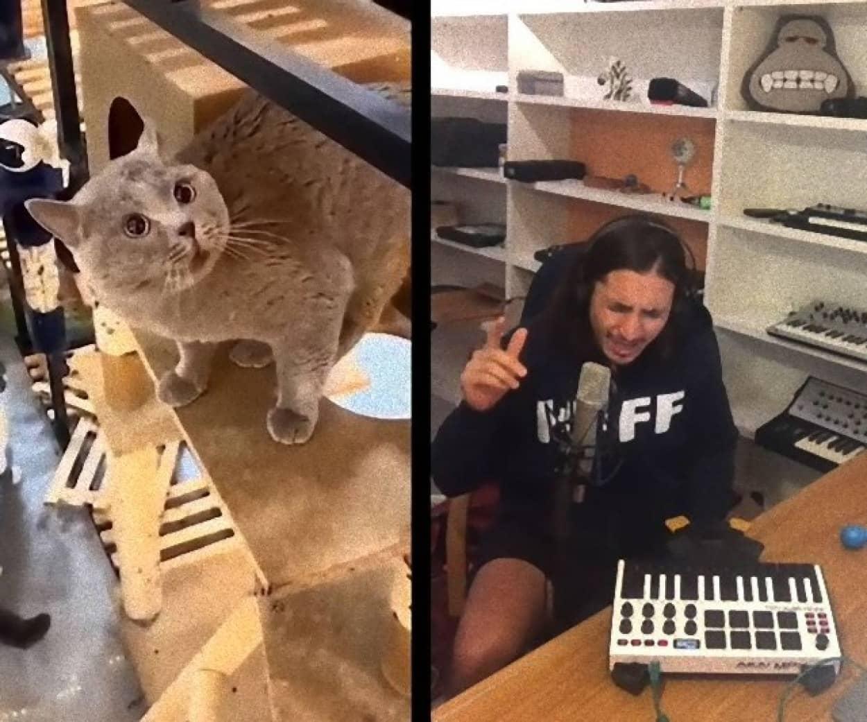 猫の鳴き声をループさせてリミックスした最高に癖になる曲