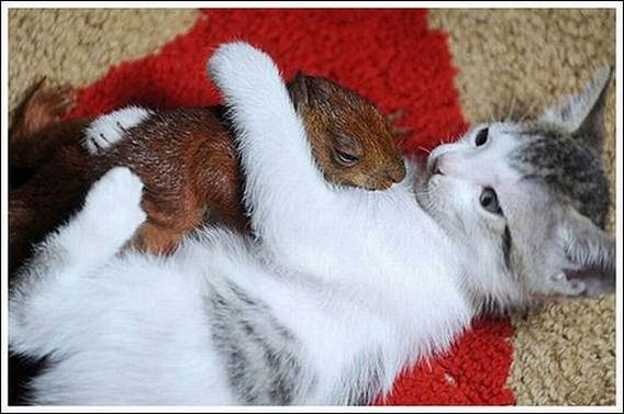 cats_and_squirell_06