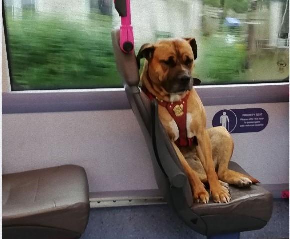 飼い主を探すため単独でバスに乗り込んできた犬の孤独な姿に、乗客ら心揺さぶられる(イギリス)