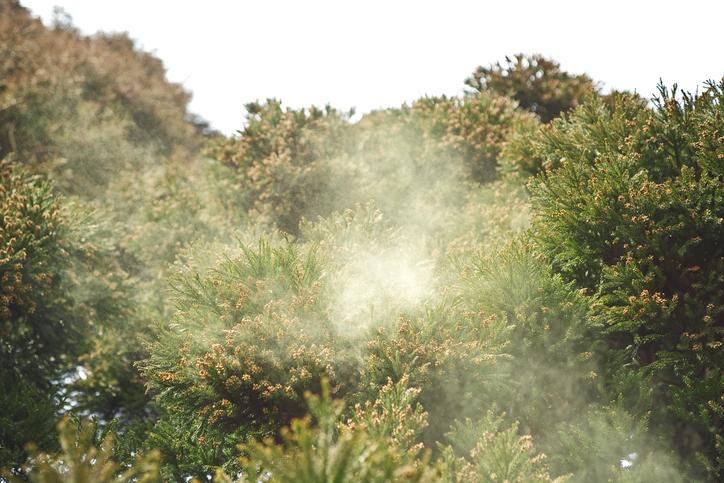 花粉症は年々ひどくなっている