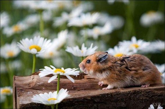 hamsters_09