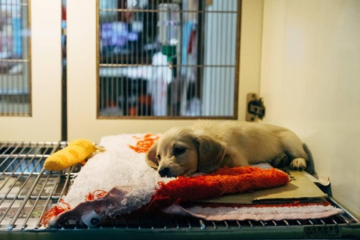 ニューヨークでペットショップでの動物販売禁止