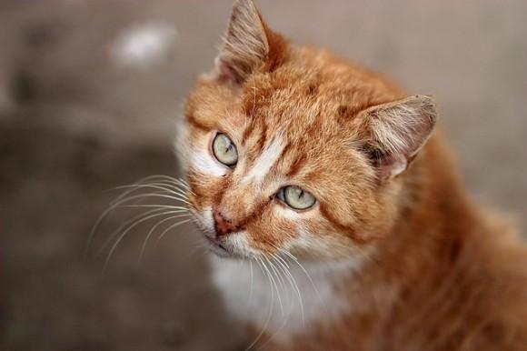 イギリスのスーパーで不買運動が勃発、その理由は猫!?
