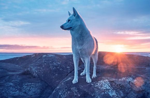 ゴミのように捨てられ人間不信となったハスキー犬が、尊厳を取り戻し再び人間と固い信頼関係を結ぶまで(カナダ)