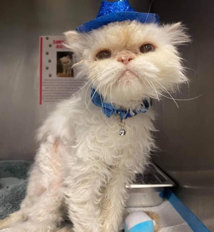 19歳の老猫に最高の誕生プレゼントが待っていた。永遠の家族の元へ