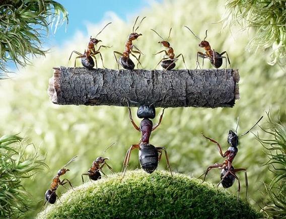 ants_06