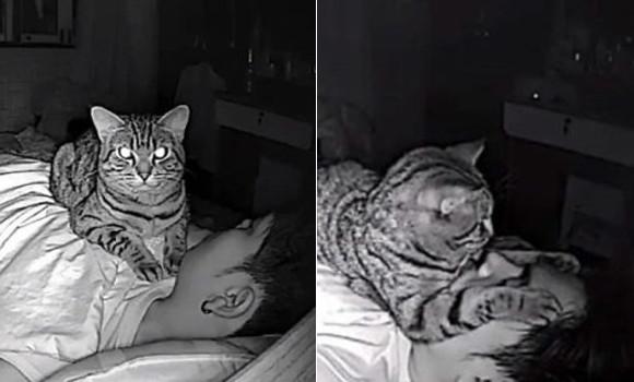 飼い主が寝ている間に猫は何をしているのだろう?隠しカメラで撮影してみたところ、愛情と殺意が交差していた(タイ)