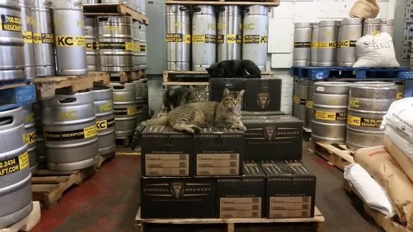 適材適所。ワイルドすぎて引き取り手のなかった野良猫たちの永久就職先はネズミの被害で困っている場所へ(シカゴ)